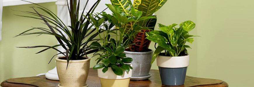 Moving House? How To Look After Indoor House Plants